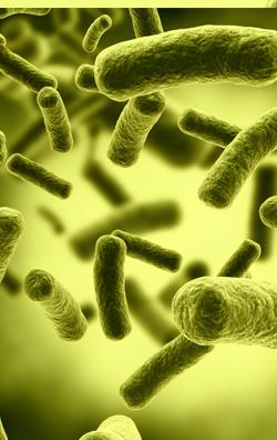 e coli in water - photo #19